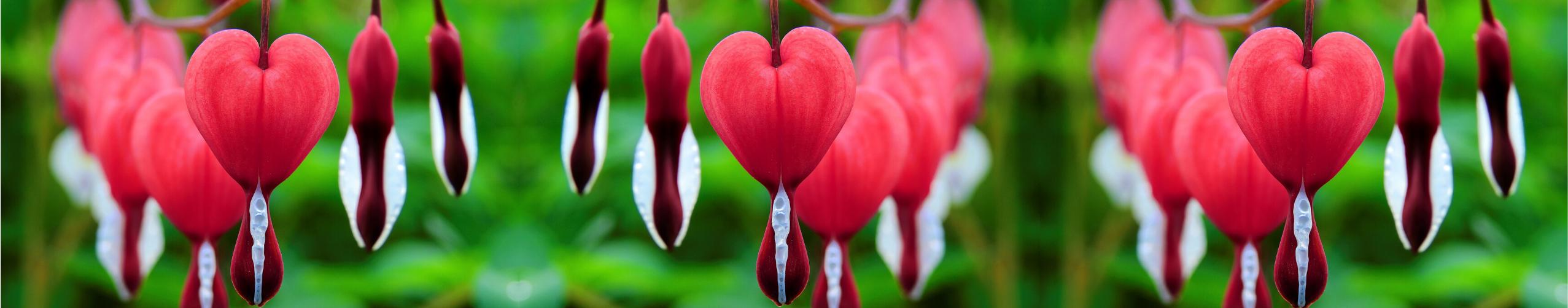 Ostani v srcu